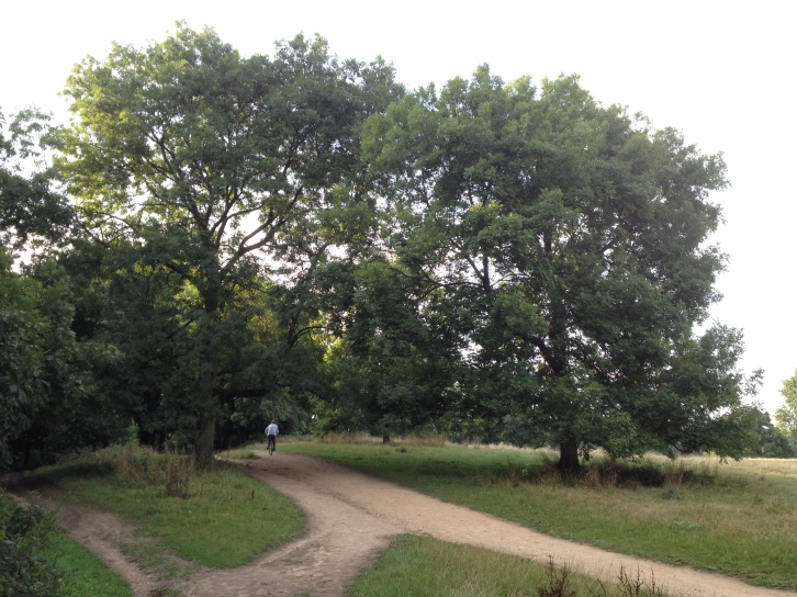 Along the Hampstead Heath many paths