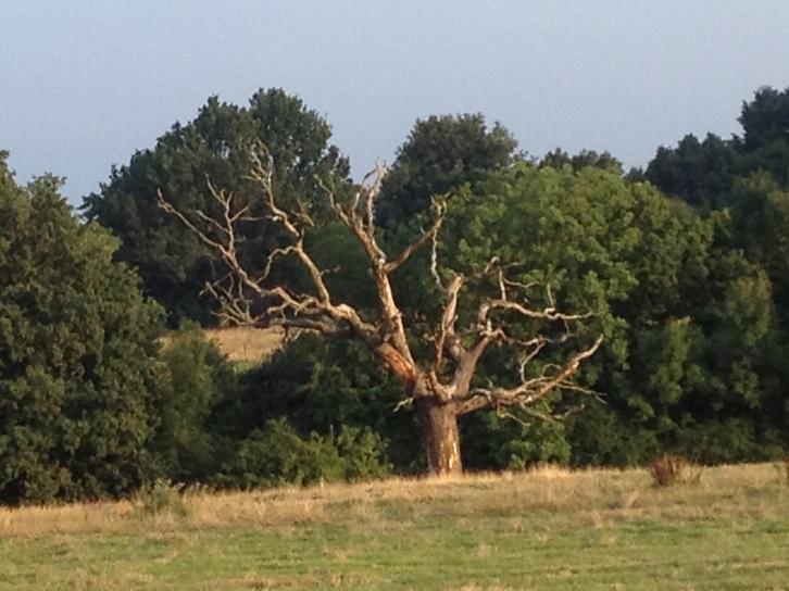 Unliving tree
