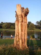 Unliving tree by the pond