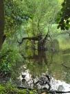 rather bonsai tree in the lake