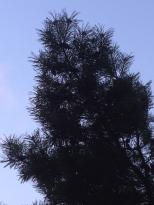 my mind tree