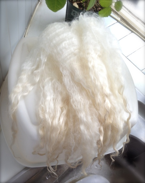 Lincoln Longwool fleece after washing
